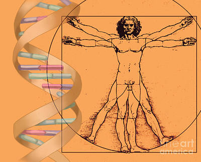 Vitruvian Man With Dna Print by Spencer Sutton