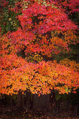 Vivid Memories Of Autumn Print by Benjamin DeHaven