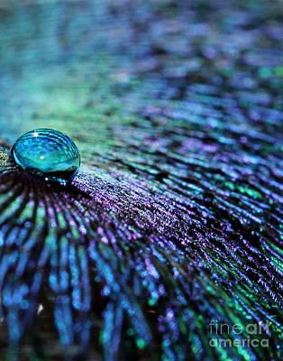Colorful Abstract Photograph - Vivid Peacock by Krissy Katsimbras