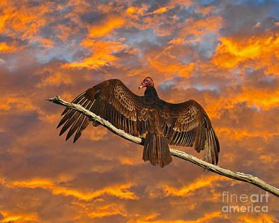 Photograph - Vivid Vulture by Al Powell Photography USA