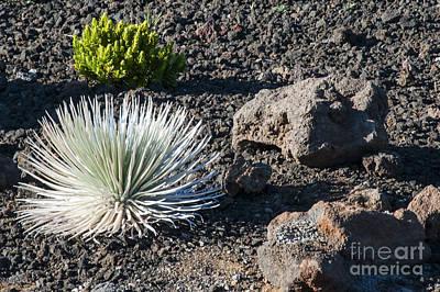 Volcanic Plant Life Print by Bob Phillips