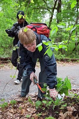 Volunteers Removing Weeds Print by Jim West