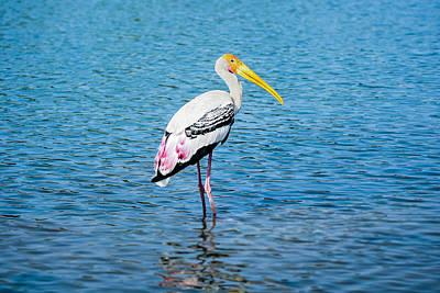 Wading Stork Print by Nila Newsom