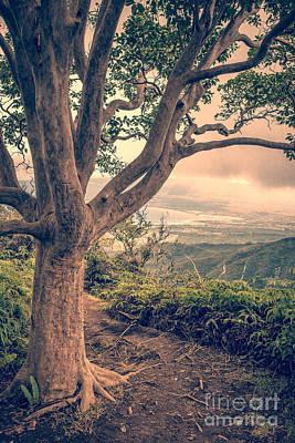 Viewpoint Photograph - Waihee Ridge Trail Maui Hawaii by Edward Fielding