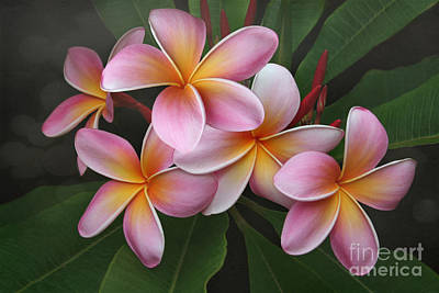 Poetic Photograph - Wailua Sweet Love Texture by Sharon Mau