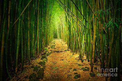 Tropical Photograph - Waimoku Bamboo Forest by Inge Johnsson