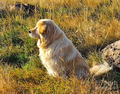 Retriever Digital Art - Waiting And Watching by L J Oakes