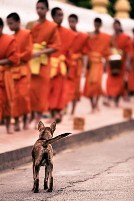 Laos Photograph - Waiting For Master by Justin Albrecht