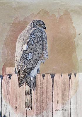 Hawk Digital Art - Waiting For Mr. Goodbird by Betty LaRue