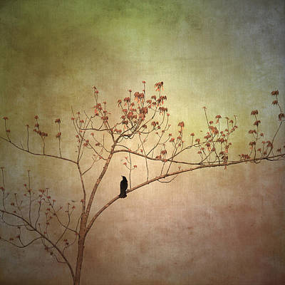 Flypaper Textures Photograph - Waiting by Jamie McCann