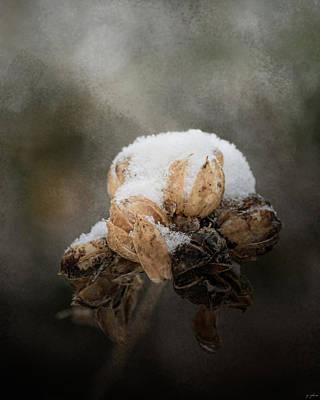 Flower Photograph - Waiting On Spring by Jai Johnson