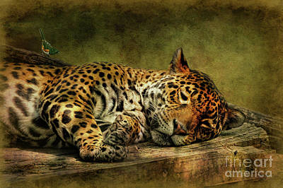 Leopard Digital Art - Wake Up Sleepyhead by Lois Bryan