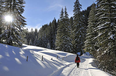 Walk In Sunny Winter Landscape Print by Matthias Hauser