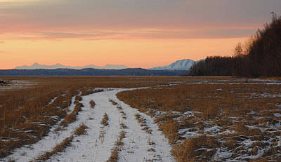 Alaska Photograph - Walk In The Wild by Ron Day