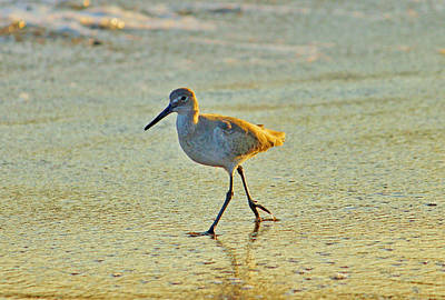 Sandpiper Digital Art - Walk On The Beach by Cynthia Guinn