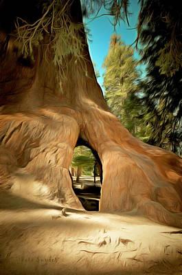 Walk Through Giant Sequoia Tree Print by Barbara Snyder