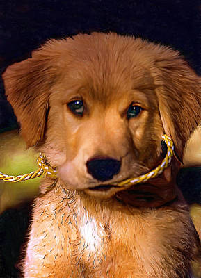 Puppies Digital Art - Walkies...pleeease - Paint by Steve Harrington