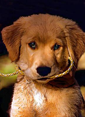 Puppies Digital Art - Walkies...pleeease by Steve Harrington