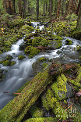 Walking To Sol Duc Print by Marco Crupi