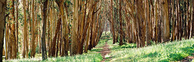 Presidio Park Photograph - Walkway Passing Through A Forest, The by Panoramic Images