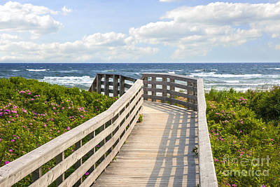 Walkway To Ocean Beach Print by Elena Elisseeva