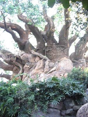Orlando Photograph - Walt Disney World Resort - Animal Kingdom - 121232 by DC Photographer