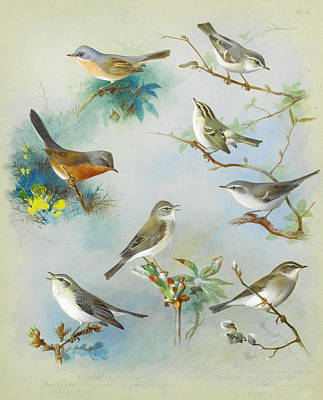 Warbler Painting - Warbler And Wrens by Celestial Images