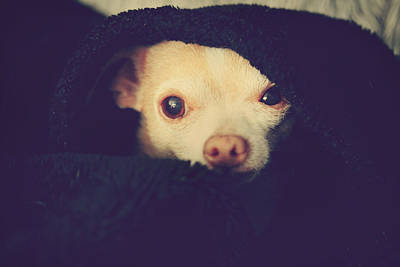 Doggy Photograph - Warm And Cozy by Laurie Search