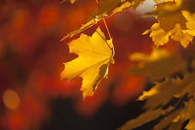 Horizontal Photograph - Warmly Fall by Steve Smith