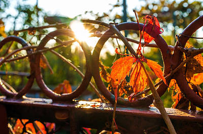 Leaf Vine Ring Photograph - Warmth by Tgchan