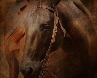 Purebred Digital Art - Warrior Horse by Terry Fleckney