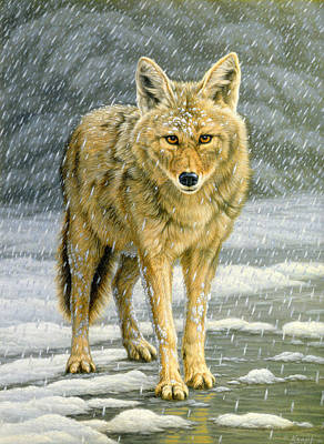 Yellowstone Painting - Wary Approach - Coyote by Paul Krapf