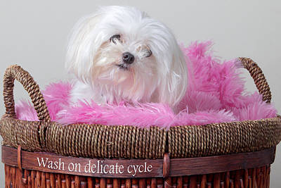 Pup Digital Art - Wash On Gentle Cycle by Purple Moon