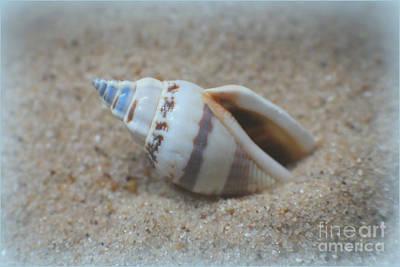 Washed Ashore Seashell Treasure Print by Ella Kaye Dickey