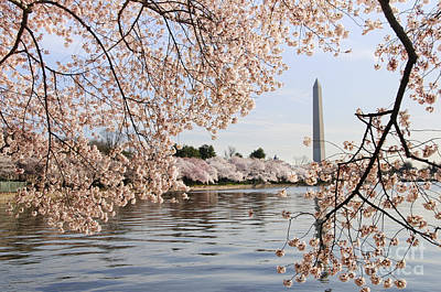 District Of Columbia Photograph - Washington Dc Cherry Blossoms And Monument by Oscar Gutierrez