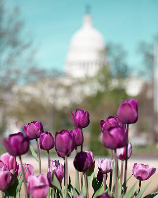 Floral Photograph - Washington Dc by Kim Fearheiley
