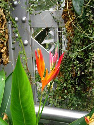 City Photograph - Washington Dc - Us Botanic Garden. - 121222 by DC Photographer