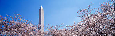 Cherry Blossoms Photograph - Washington Monument Behind Cherry by Panoramic Images