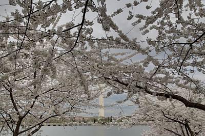 Decor Photograph - Washington Monument - Cherry Blossoms - Washington Dc - 011323 by DC Photographer