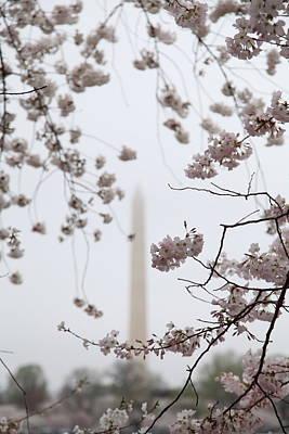 Outdoors Photograph - Washington Monument - Cherry Blossoms - Washington Dc - 011339 by DC Photographer