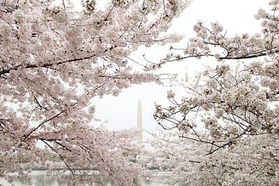 Tidal Photograph - Washington Monument - Cherry Blossoms - Washington Dc - 011343 by DC Photographer