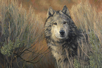 Gray Wolf Painting - Watchful by Lucie Bilodeau