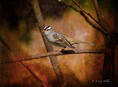 White-crowned Digital Art - Watchful White-crowned Sparrow by J Larry Walker