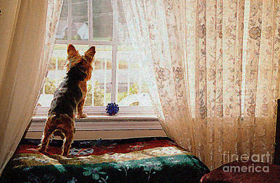 Photograph - Watching For His Master by Jak of Arts Photography