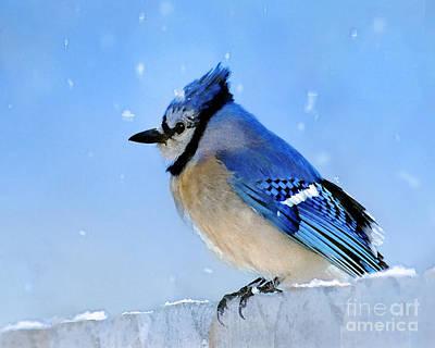 Cyanocitta Cristata Photograph - Watching The Snow by Betty LaRue