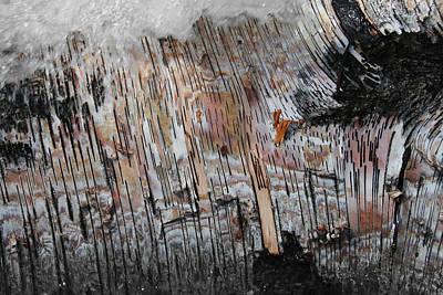 Birch Bark Photograph - Water And Birch by Dylan Punke