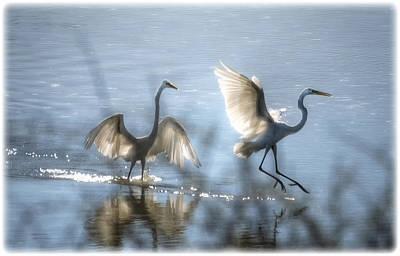 Egret Photograph - Water Ballet  by Saija  Lehtonen