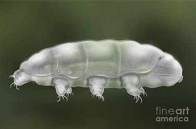 Microscopy Mixed Media - Water Bear Tardigrada - Waterbear Tardigrade  - Scientific Illustration by Urft Valley Art