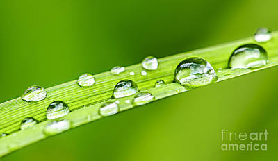 Water Drops On Grass Blade Print by Elena Elisseeva