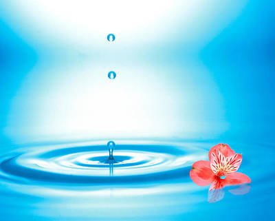 Flower Ring Photograph - Water Drops Rising From Water Rings by Panoramic Images